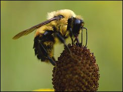 bee picture1
